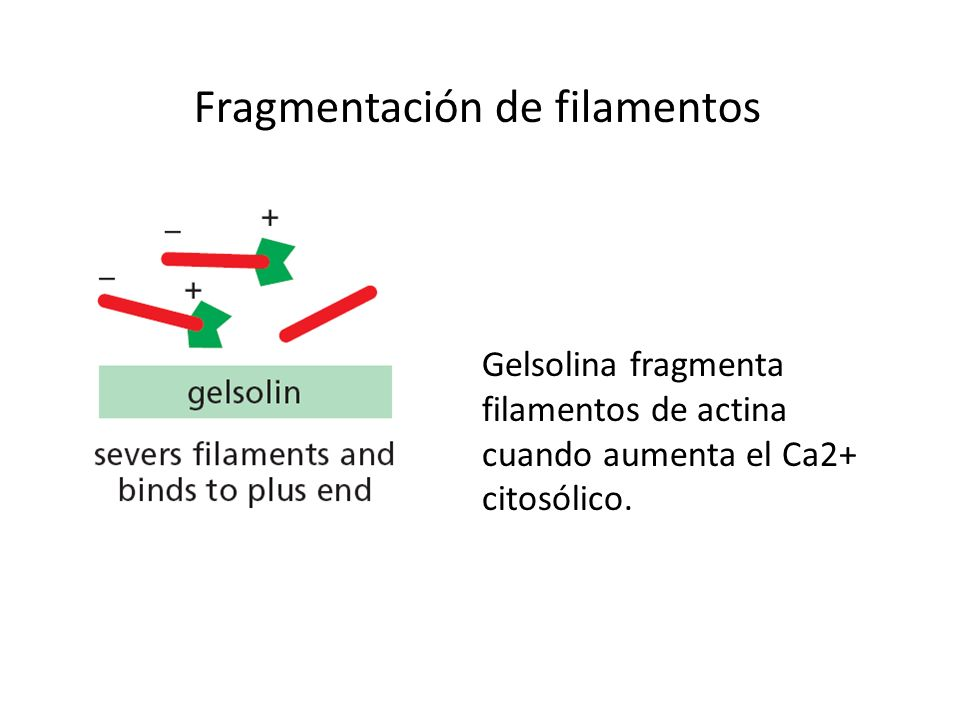 Fragmentación de filamentos