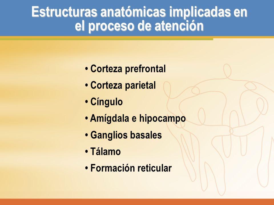 Estructuras anatómicas implicadas en