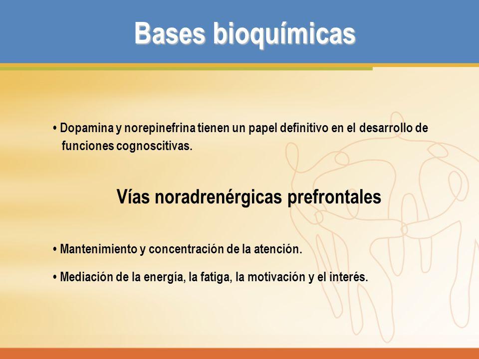Vías noradrenérgicas prefrontales