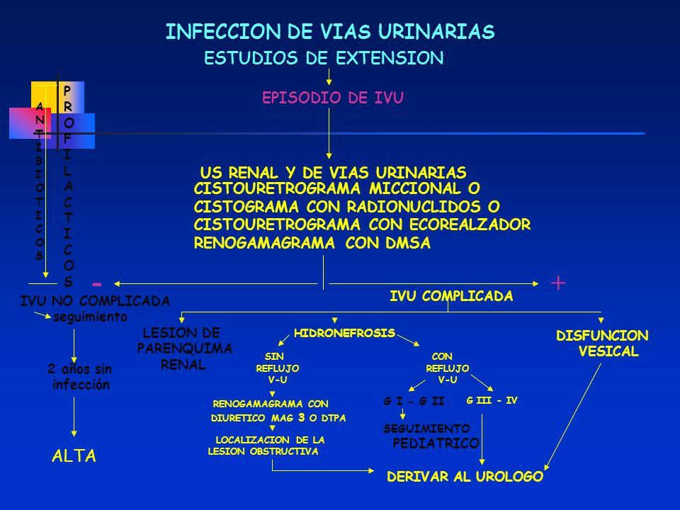 - + INFECCION DE VIAS URINARIAS ESTUDIOS DE EXTENSION ALTA