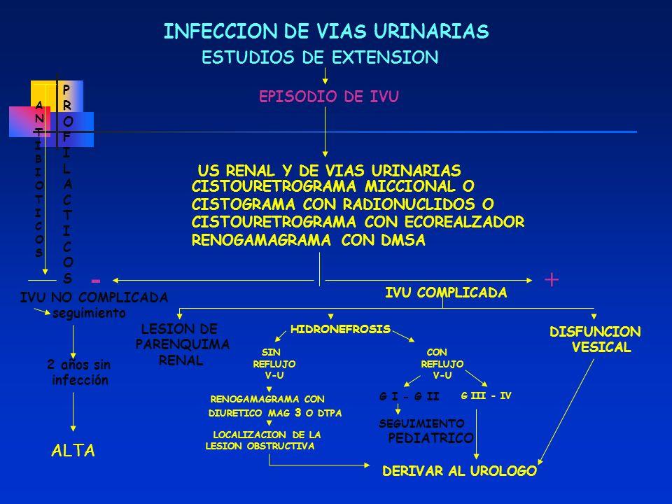 - + INFECCION DE VIAS URINARIAS ESTUDIOS DE EXTENSION ALTA