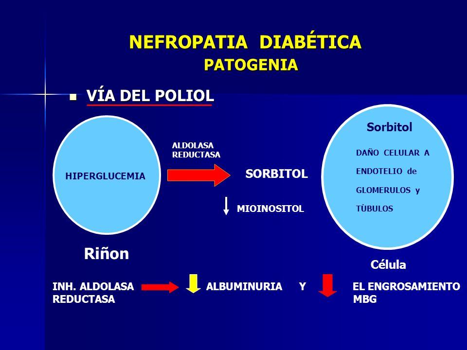 NEFROPATIA DIABÉTICA PATOGENIA