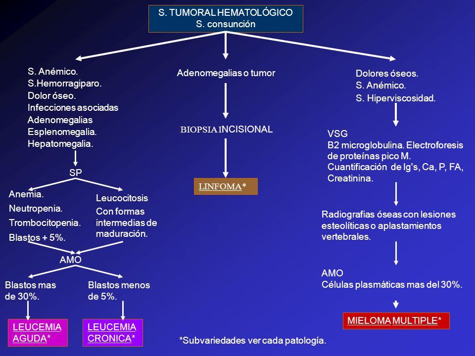 S. TUMORAL HEMATOLÓGICO
