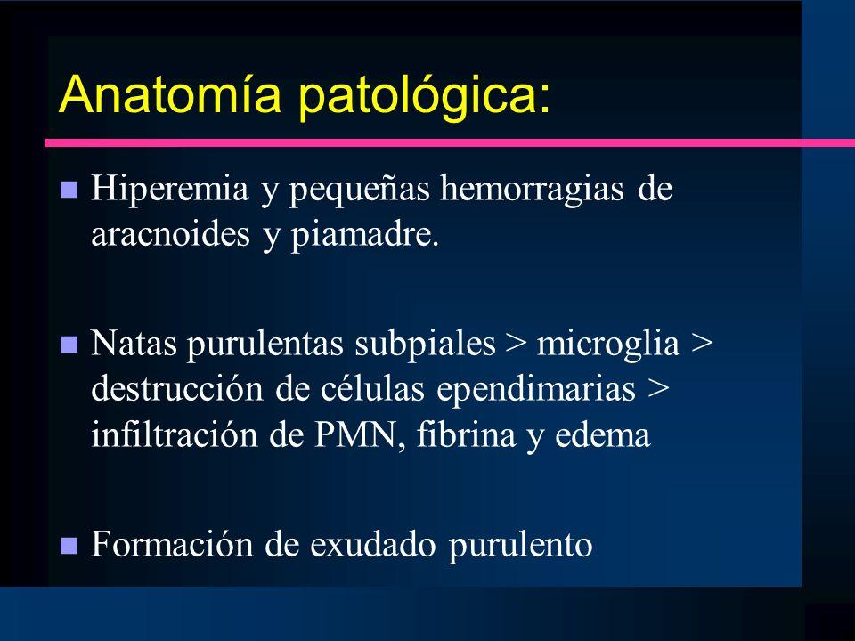 Anatomía patológica: Hiperemia y pequeñas hemorragias de aracnoides y piamadre.