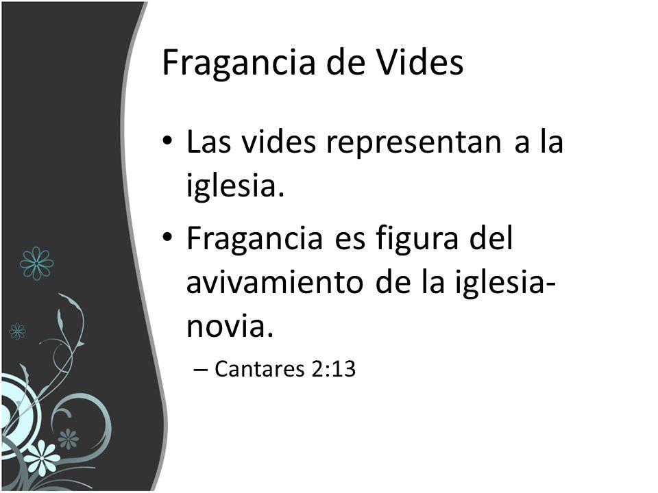 Fragancia de Vides Las vides representan a la iglesia.