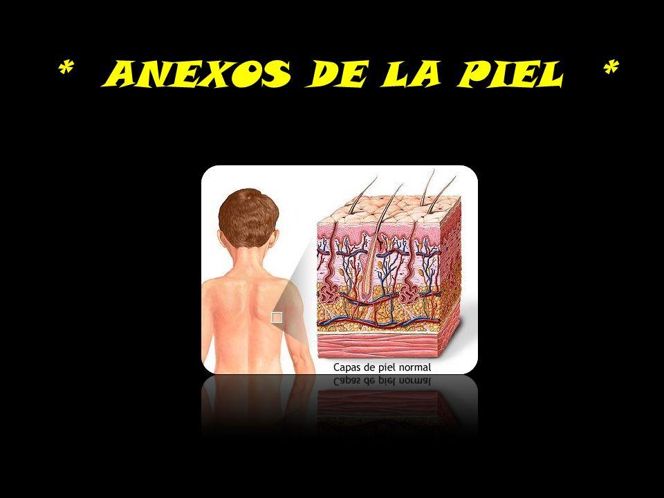 * ANEXOS DE LA PIEL *