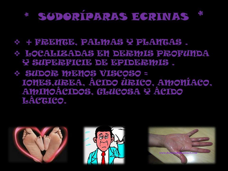 * SUDORÍPARAS ECRINAS *