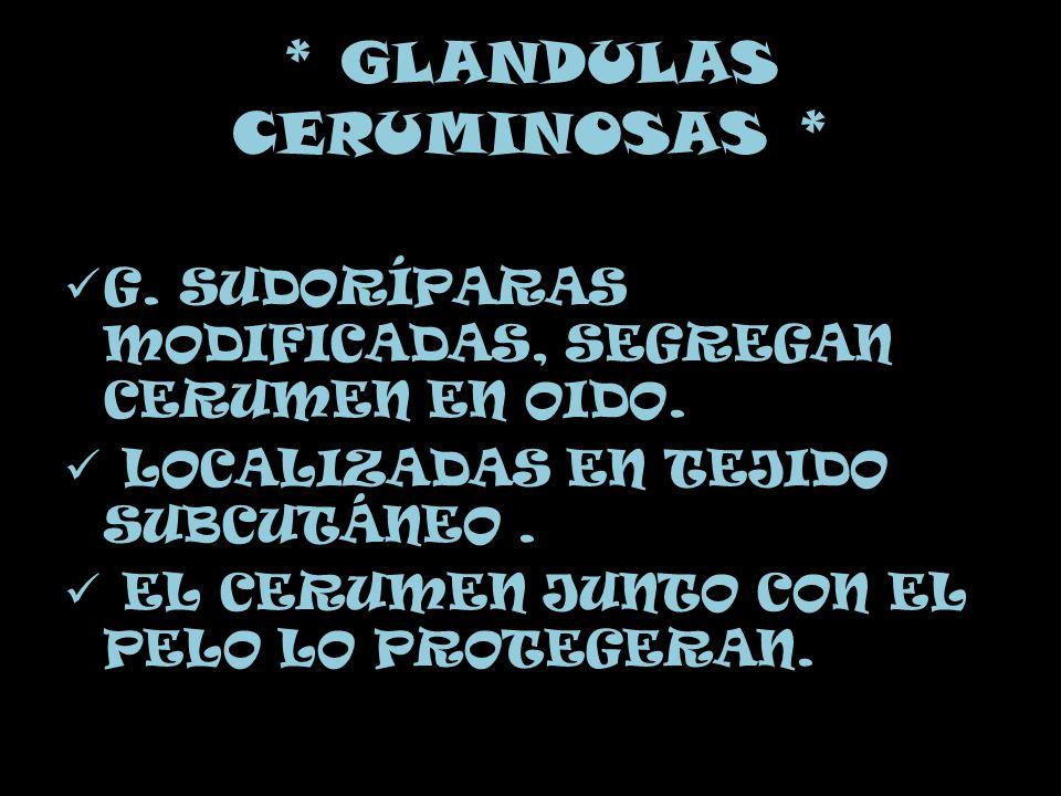 * GLANDULAS CERUMINOSAS *