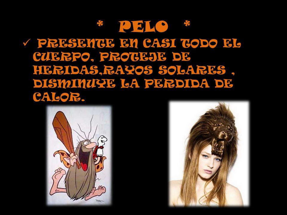 * PELO * PRESENTE EN CASI TODO EL CUERPO, PROTEJE DE HERIDAS,RAYOS SOLARES , DISMINUYE LA PERDIDA DE CALOR.