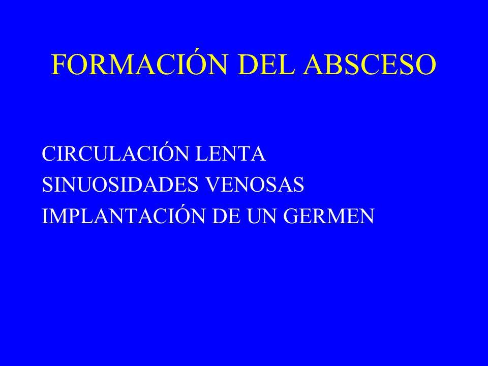 FORMACIÓN DEL ABSCESO CIRCULACIÓN LENTA SINUOSIDADES VENOSAS