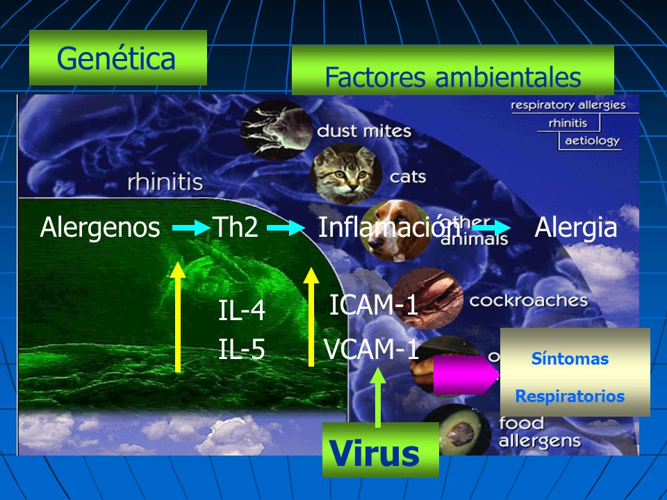Virus Genética Factores ambientales Alergenos Th2 Inflamación Alergia