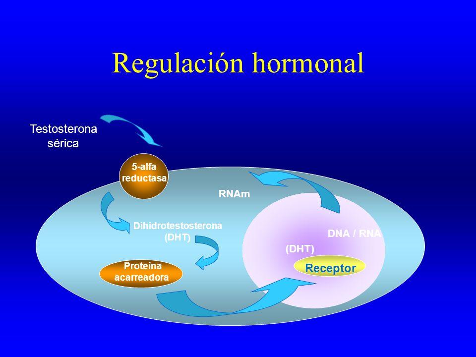 Regulación hormonal Testosterona sérica Receptor (DHT) 5-alfa