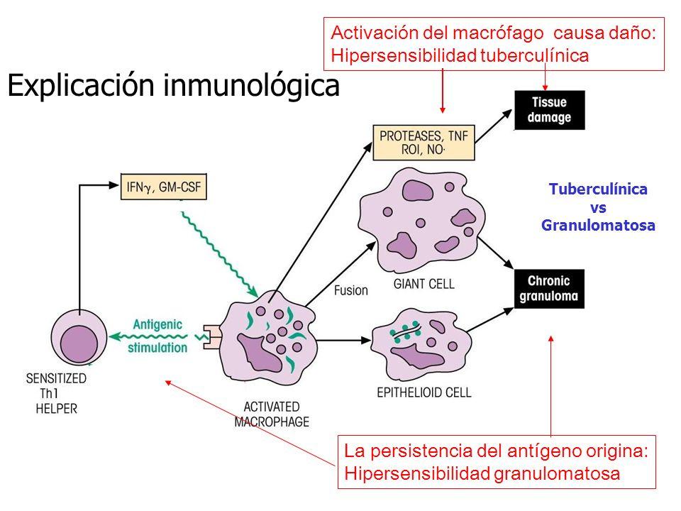 Explicación inmunológica