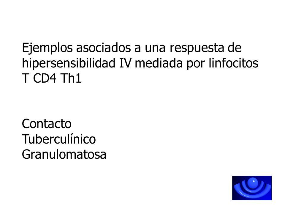 Ejemplos asociados a una respuesta de hipersensibilidad IV mediada por linfocitos T CD4 Th1