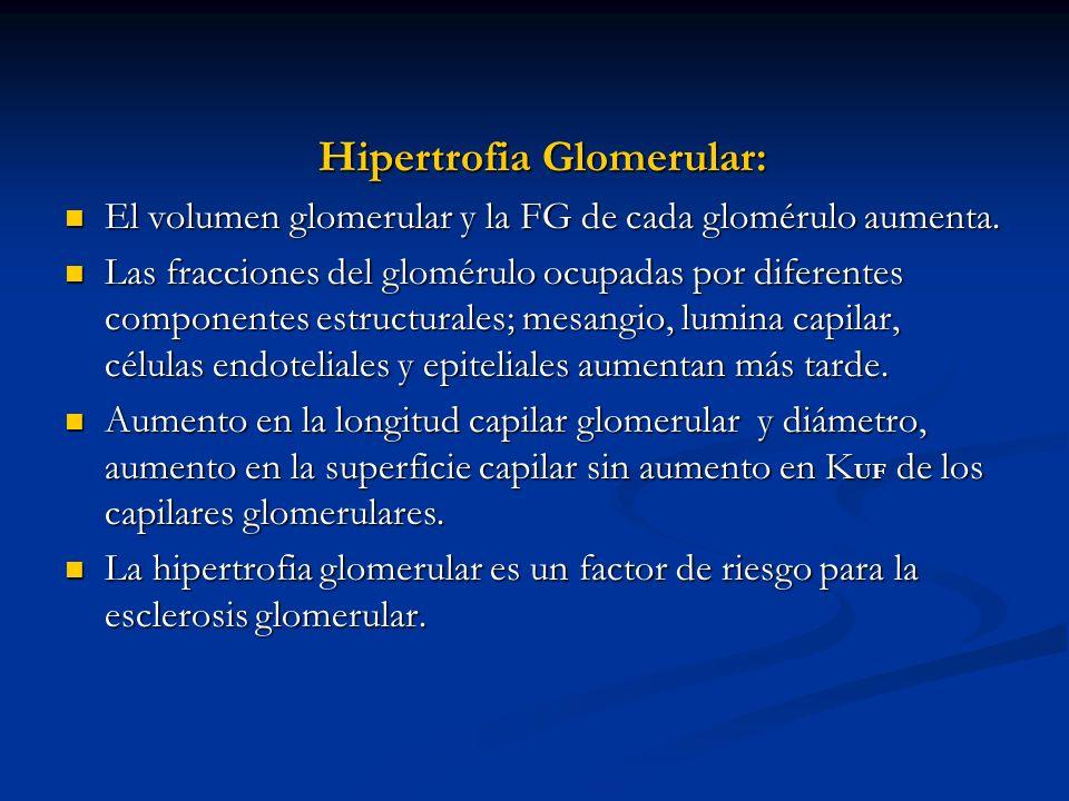 Hipertrofia Glomerular: