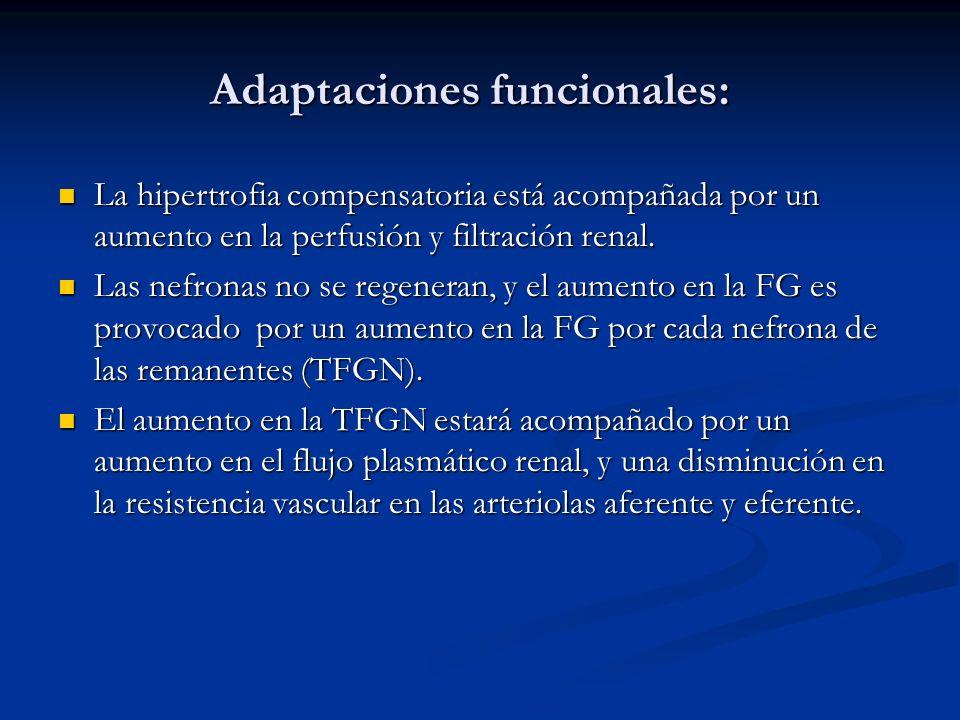 Adaptaciones funcionales: