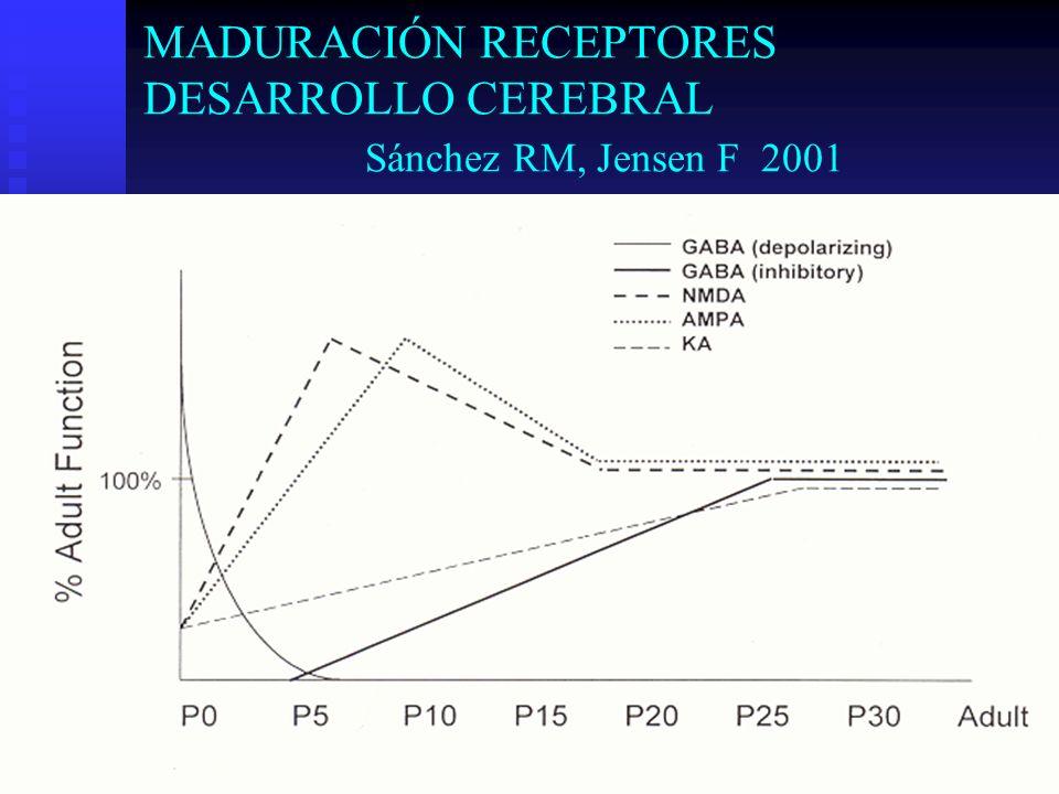 MADURACIÓN RECEPTORES DESARROLLO CEREBRAL Sánchez RM, Jensen F 2001