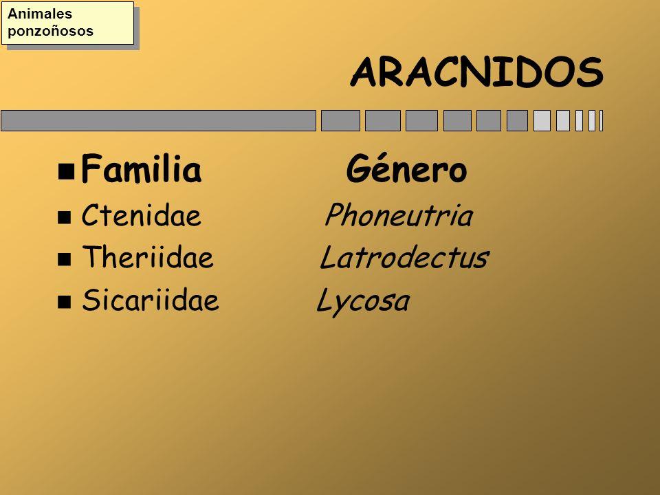 ARACNIDOS Familia Género Ctenidae Phoneutria Theriidae Latrodectus