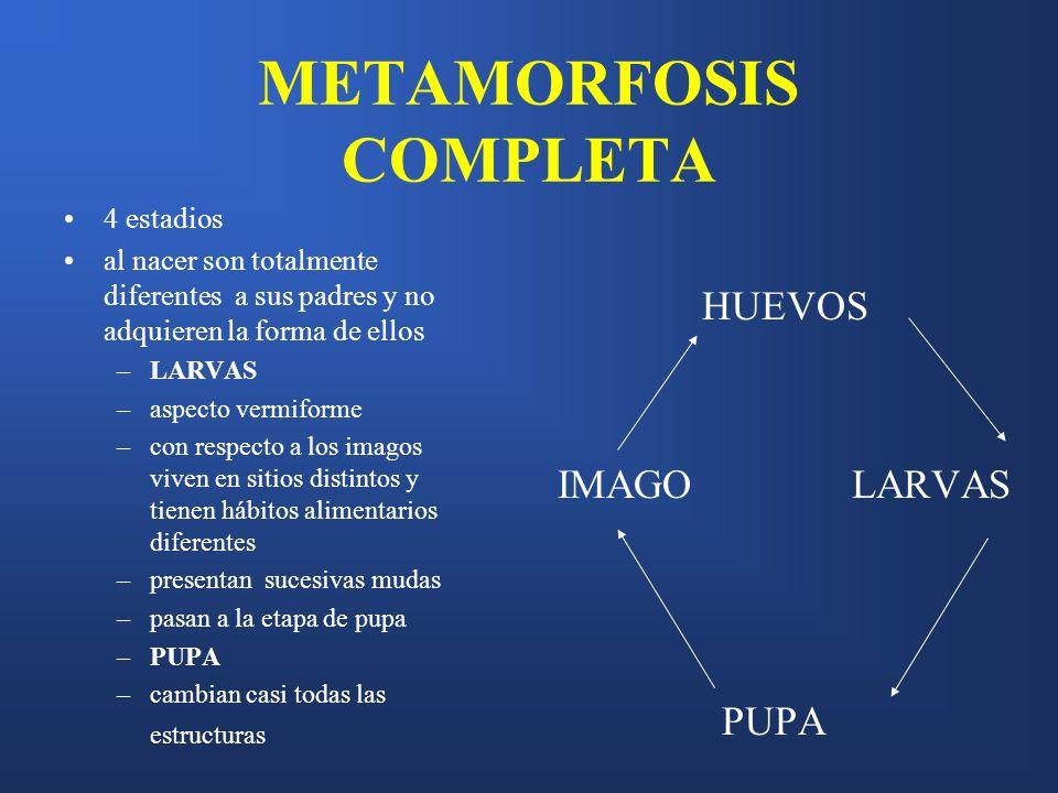 METAMORFOSIS COMPLETA