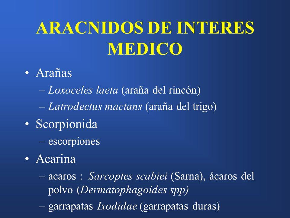 ARACNIDOS DE INTERES MEDICO