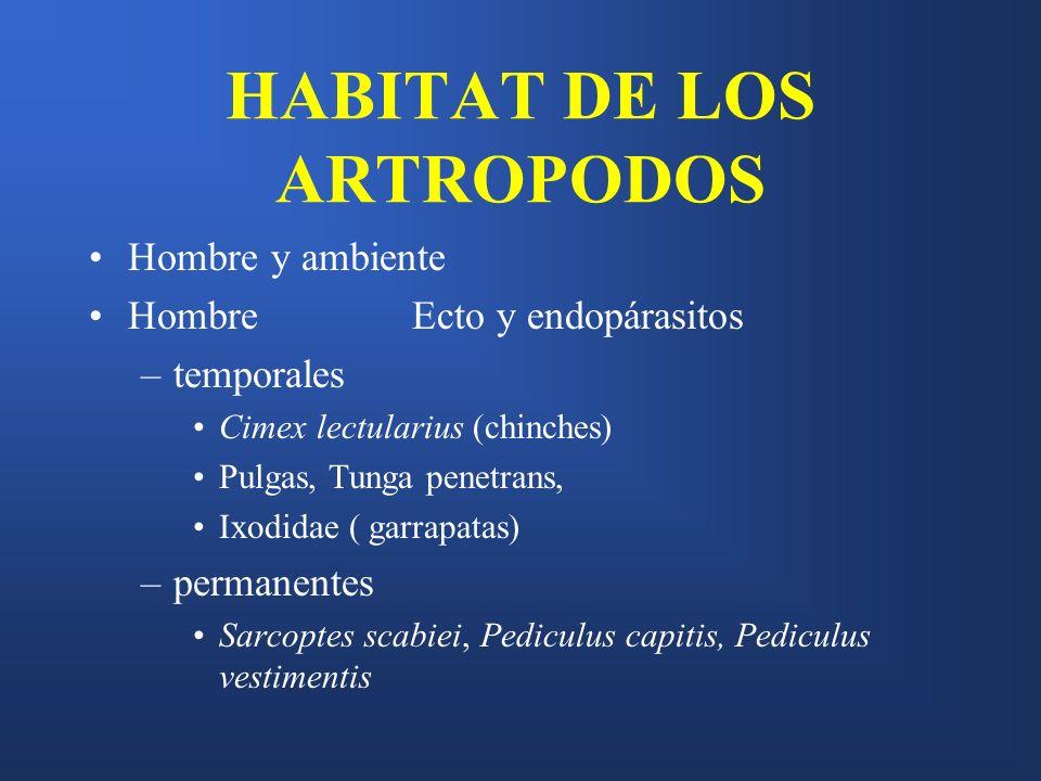 HABITAT DE LOS ARTROPODOS