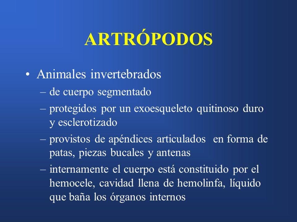 ARTRÓPODOS Animales invertebrados de cuerpo segmentado