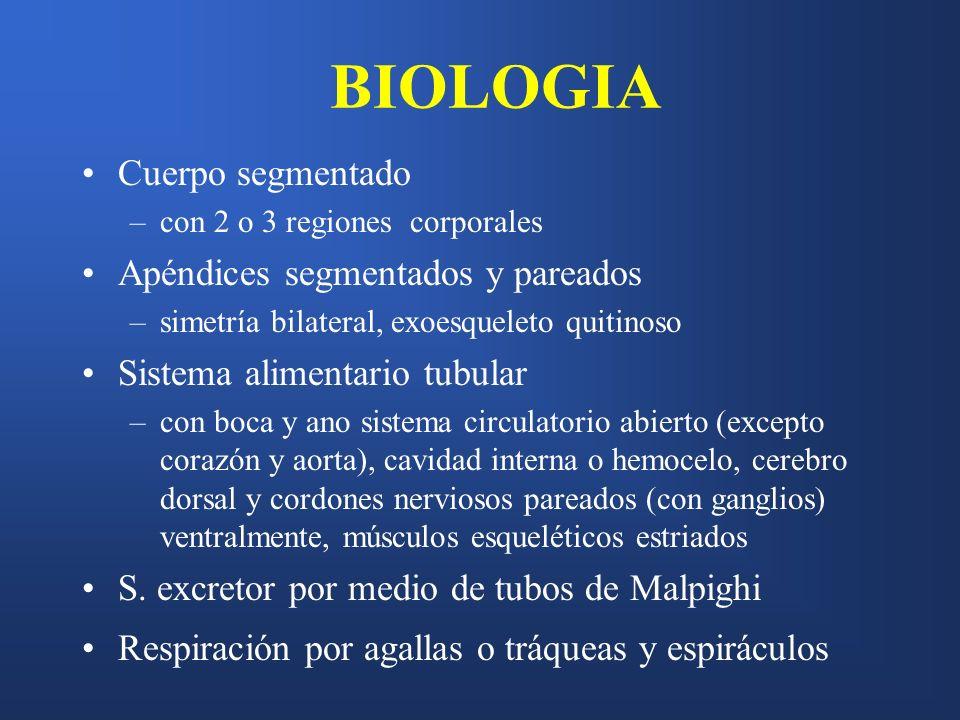BIOLOGIA Cuerpo segmentado Apéndices segmentados y pareados