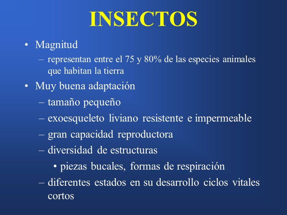 INSECTOS Magnitud Muy buena adaptación tamaño pequeño