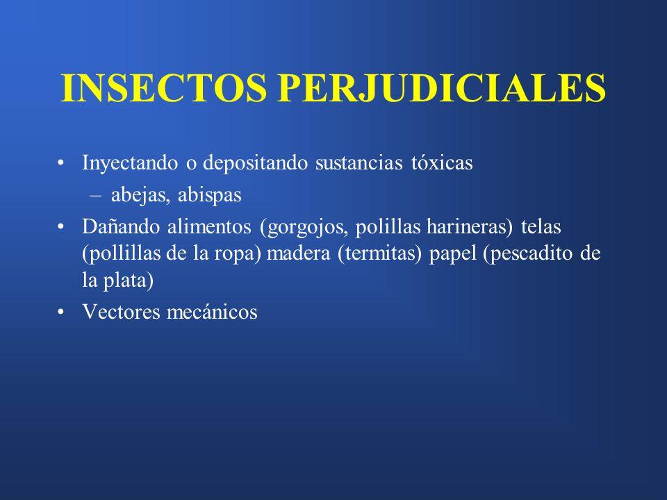 INSECTOS PERJUDICIALES
