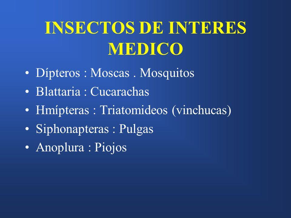 INSECTOS DE INTERES MEDICO