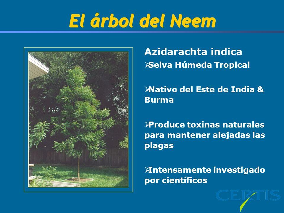 El árbol del Neem Azidarachta indica Selva Húmeda Tropical
