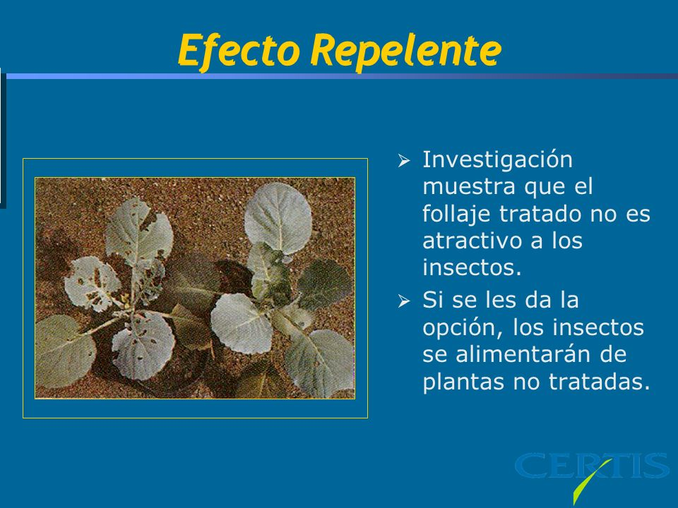 Efecto Repelente Tim, The plant on the right is treated & the plant on the left is untreated.
