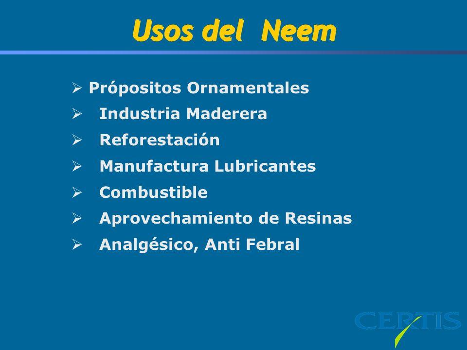 Usos del Neem Própositos Ornamentales Industria Maderera Reforestación