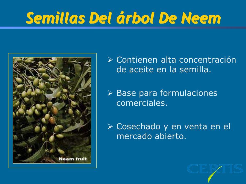 Semillas Del árbol De Neem