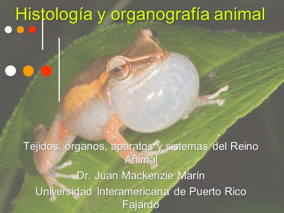Histología y organografía animal