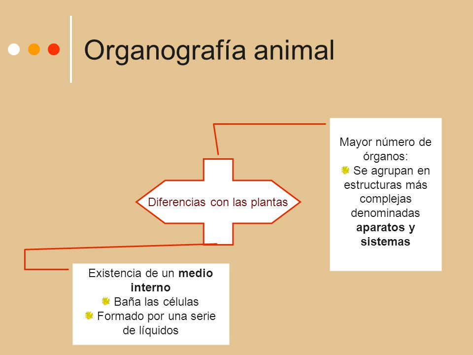 Organografía animal Mayor número de órganos: