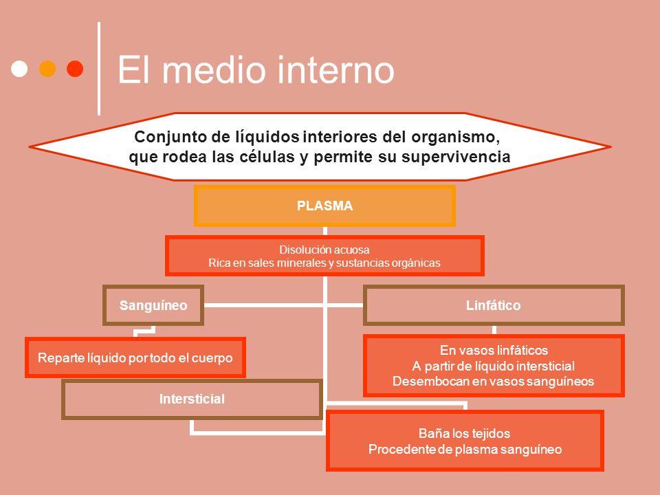 El medio interno Conjunto de líquidos interiores del organismo,