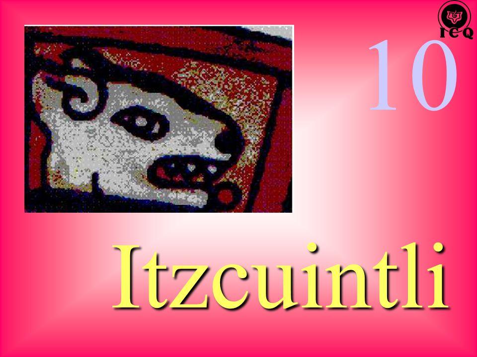10 Itzcuintli