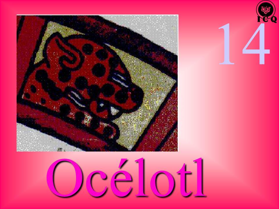 14 Océlotl