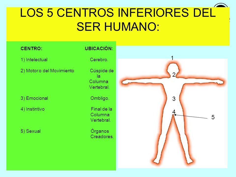 LOS 5 CENTROS INFERIORES DEL SER HUMANO: