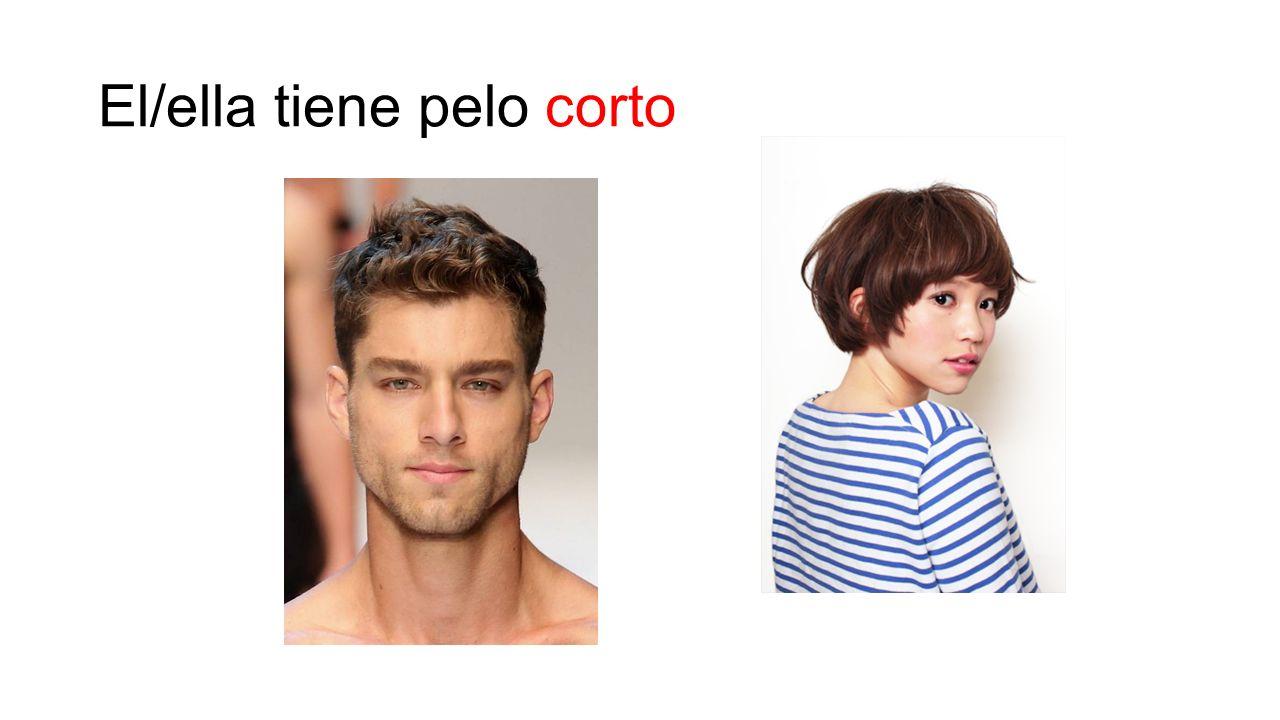 El/ella tiene pelo corto