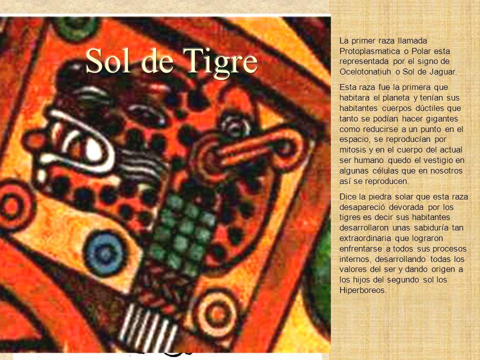 Sol de Tigre Ocelotonatiuh 1a. Raza