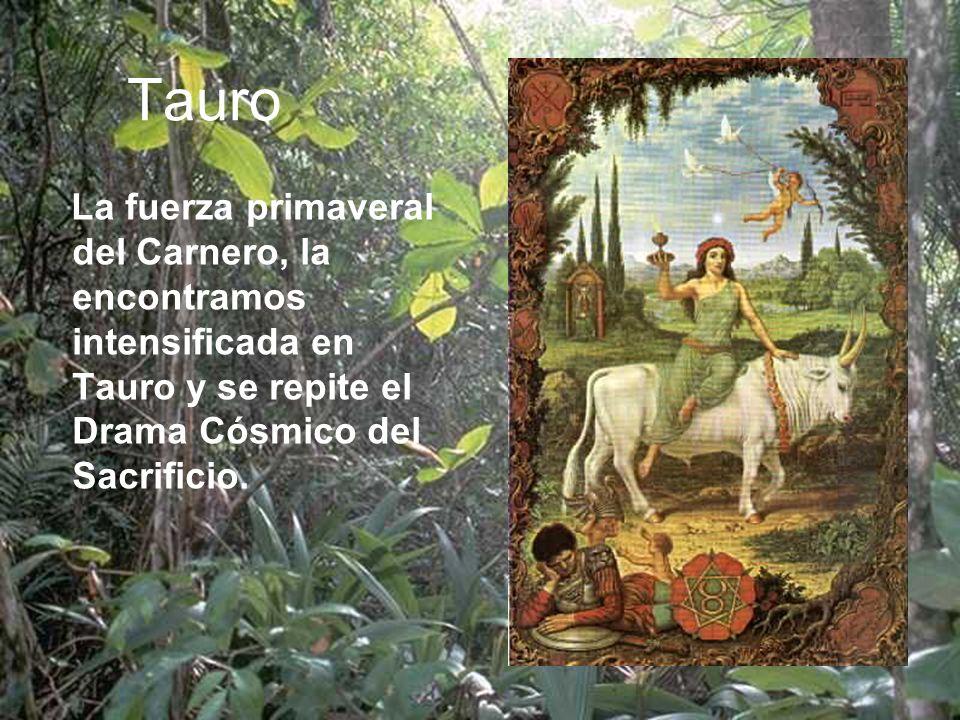 Tauro La fuerza primaveral del Carnero, la encontramos intensificada en Tauro y se repite el Drama Cósmico del Sacrificio.