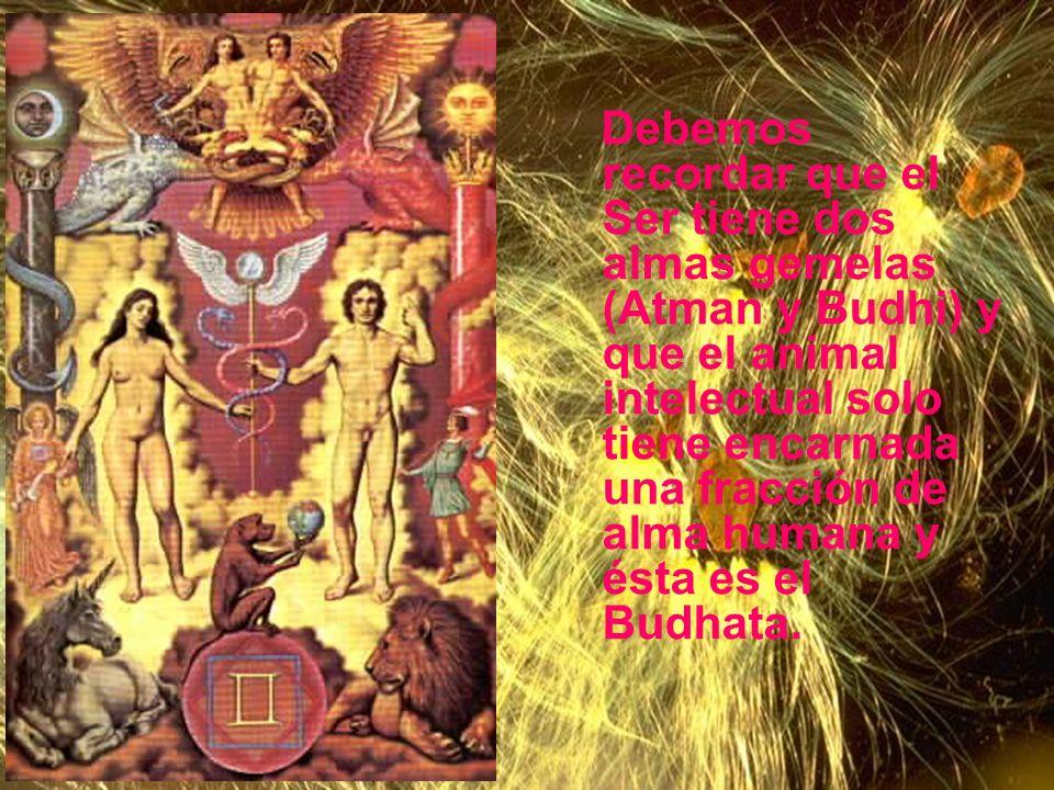 Debemos recordar que el Ser tiene dos almas gemelas (Atman y Budhi) y que el animal intelectual solo tiene encarnada una fracción de alma humana y ésta es el Budhata.