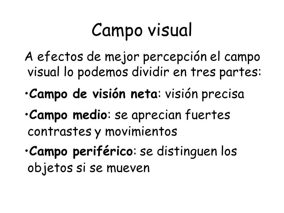 Campo visual A efectos de mejor percepción el campo visual lo podemos dividir en tres partes: Campo de visión neta: visión precisa.