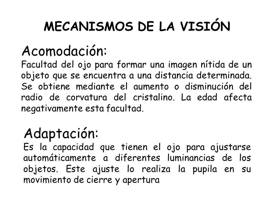 MECANISMOS DE LA VISIÓN