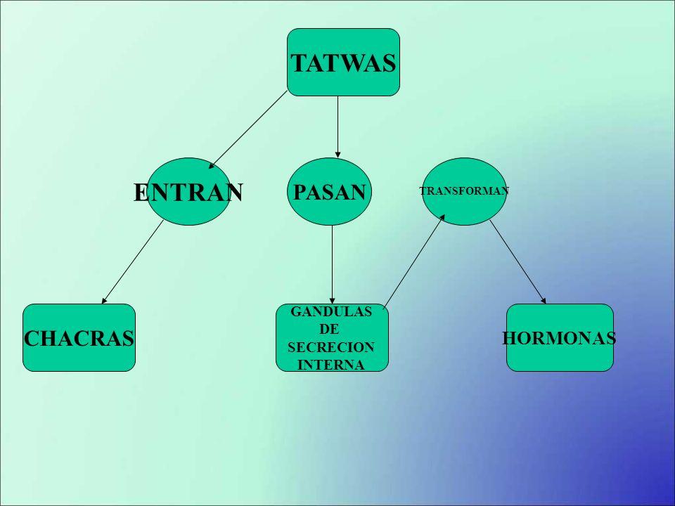 TATWAS ENTRAN PASAN CHACRAS HORMONAS GANDULAS DE SECRECION INTERNA
