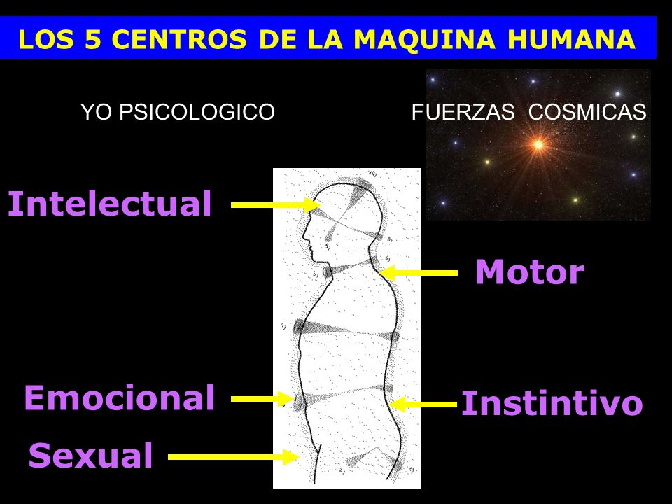 Intelectual Motor Emocional Instintivo Sexual