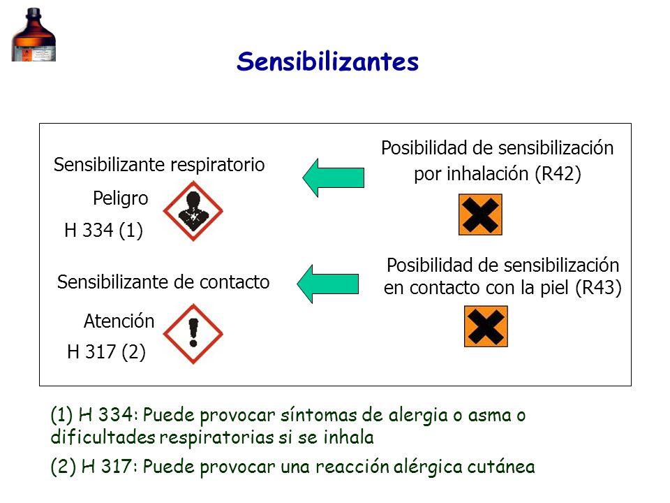 Sensibilizantes Posibilidad de sensibilización por inhalación (R42)
