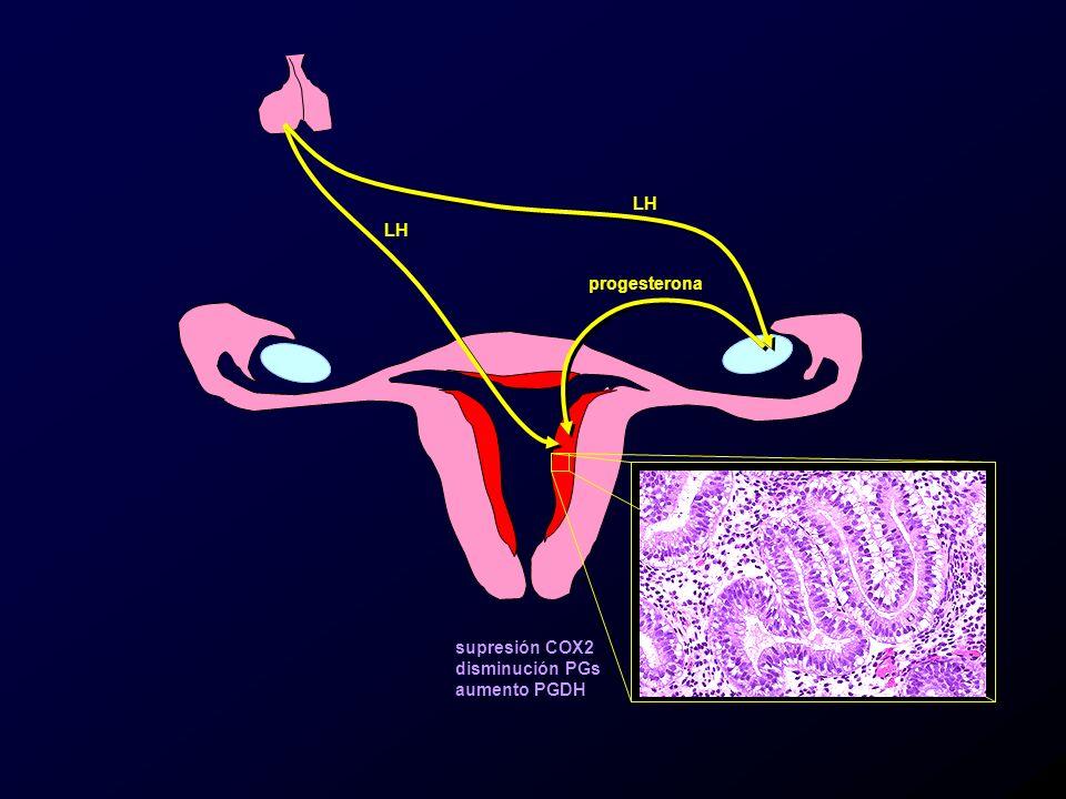 LH LH progesterona supresión COX2 disminución PGs aumento PGDH